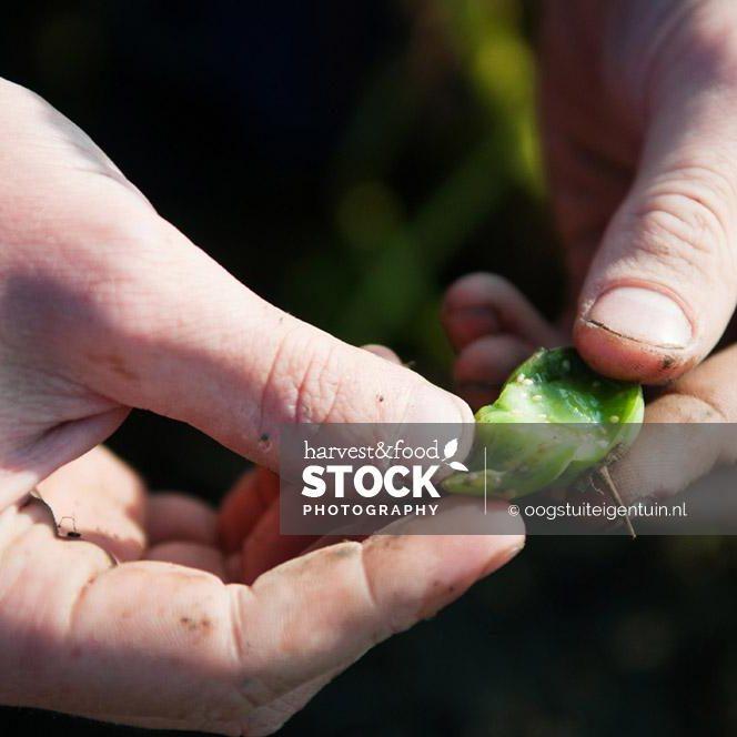 foodstock-aardappel-2437-uit