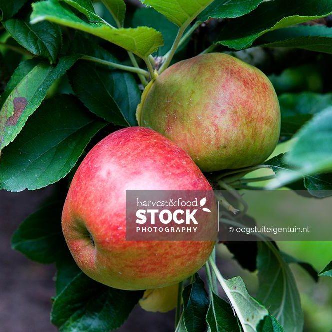 appels_4272_uit