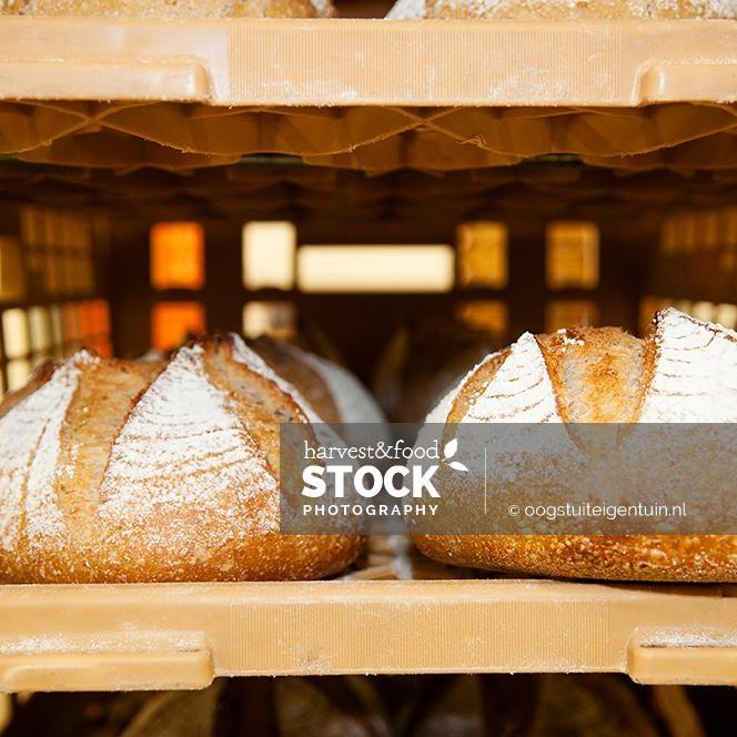 brood_6193_uit