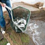 5074 Vis in een net gevangen